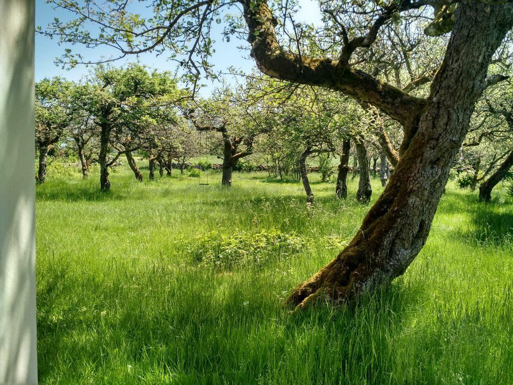 Über 30 alte Obstbäume schmücken den Garten